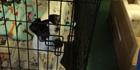 IP Surveillance Provider Axis Communications Donates Network Solution To Northeast Arkansas Humane Society