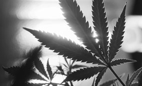 Cannabis And Security: Technology Solutions Provide Protection For Emerging Legalized Marijuana Industry