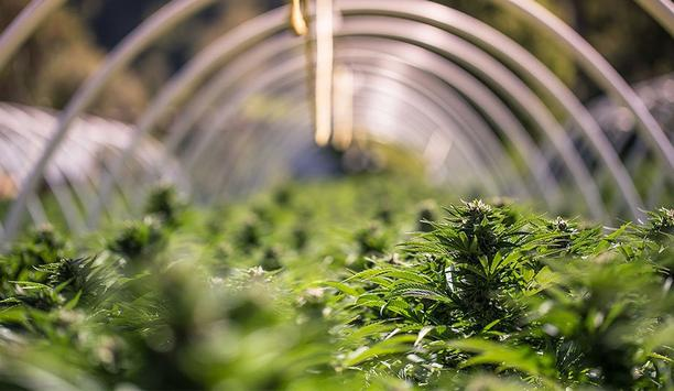 Salient Systems Highlights What Cannabis Operators Need To Know With Widespread Legalization And Medical Use Of Cannabis