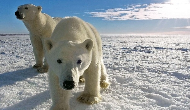 Milestone Systems' Radar-Based Video Surveillance System Protects Hogle Zoo Visitors From Polar Bears