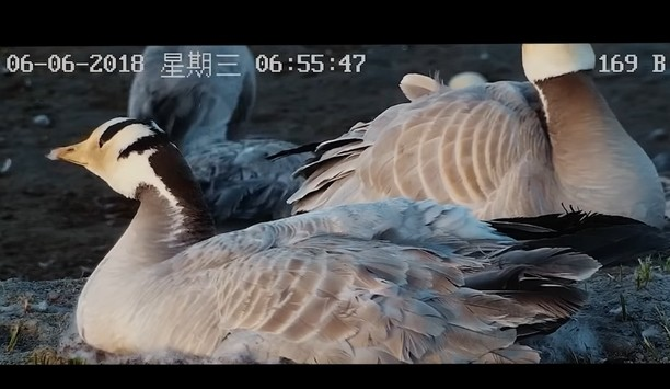 Hikvision Provides Solution For Protection Of Bar-headed Geese